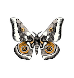 hand drawn african emperor moth - gonimbrazia vector image