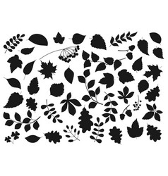 Leaf silhouettes tree leaves and seeds icons vector