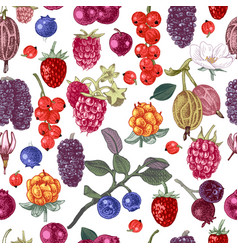 seamless pattern with hand drawn berries vector image