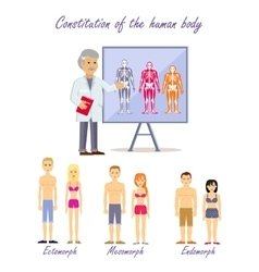 Constitution of the human body types vector