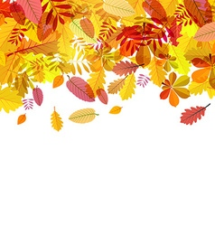 Autumn Falling Leaves on White Background vector image
