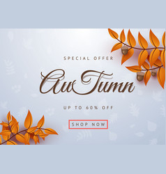 autumn special offer leaves background vector image