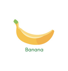 banana bunches of fresh banana fruits vector image