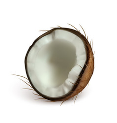 Coconut half piece freshness exotic nut vector