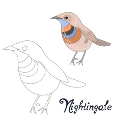 Educational game connect dots draw nightingale vector