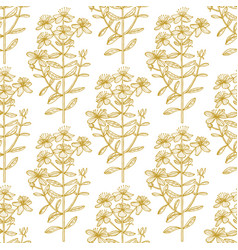 hypericum graphic pattern in hand drawn style vector image