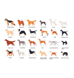 Set of dogs of different breeds isolated on white vector