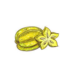 starfruit isolated carambola star shape slice vector image