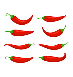 Closeup chilly pepper set vector