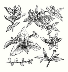 drawing plants set vector image
