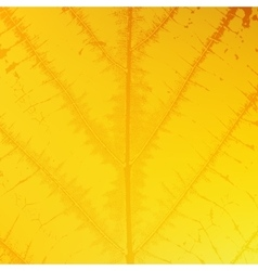 Yellow Leaf Texture vector image vector image