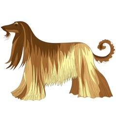 afghan hound vector image
