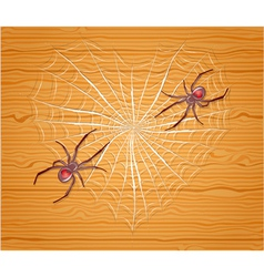 Spiders with heart vector image vector image