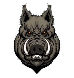 Angry boar head vector