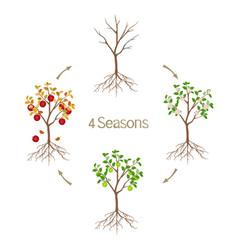Four seasons apple tree vector