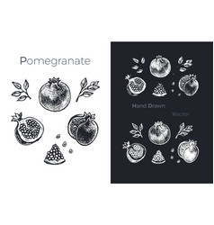 hand drawn pomegranate fruits sketch set vector image