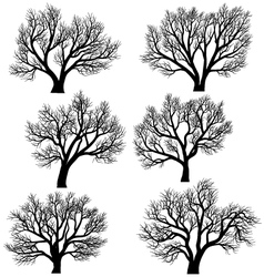 Silhouettes trees without leaves vector