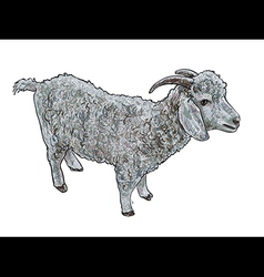 Angora goat- vector image