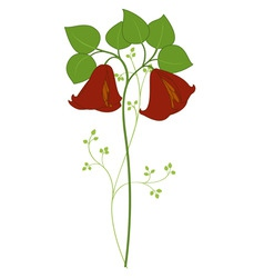 campanula flower vector image vector image