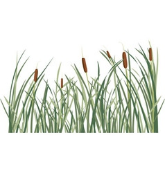 Reed and green grass background vector image vector image