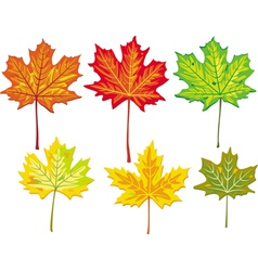 colorful maple leaves collection vector image
