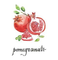 Watercolor raw pomegranates vector