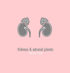 endocrine glands image vector image