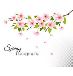sakura japan cherry branch with a pink flowers on vector image