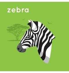 Zebra on green backdrop vector
