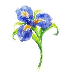 Blue watercolor iris flower vector image