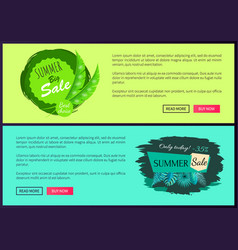 best choice discount 35 percent summer sale promo vector image