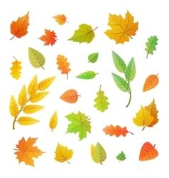 big set cute leaves from different trees on vector image