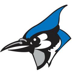 blue jay head sports logo mascot vector image
