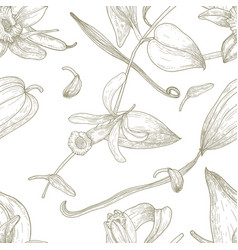 botanical seamless pattern with vanilla leaves vector image vector image