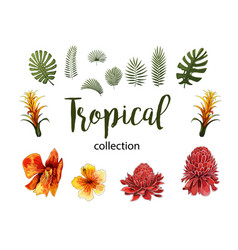 exotic flowers tropical leaves design elements vector image