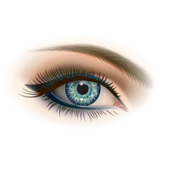 female gray eye with makeup vector image