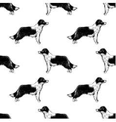 Seamless pattern with border collies vector