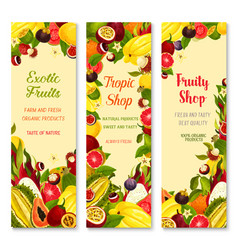 banners of exotic fruits for tropical vector image