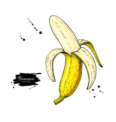 banana drawing isolated hand drawn peel vector image
