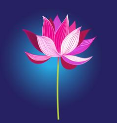 beautiful pink lotus flower vector image