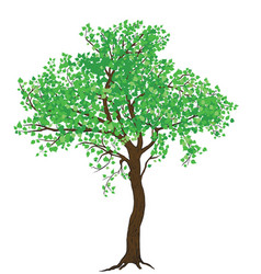 Isolated summer green tree vector