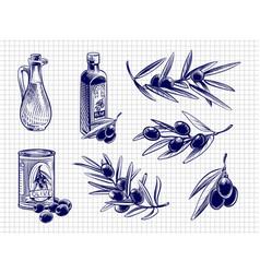 olive oil bottles and olives vector image