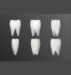 rotation tooth animation frames realistic 3d vector image