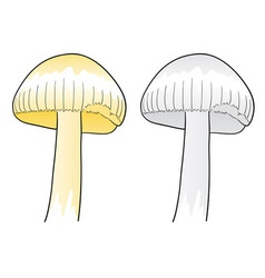 two mushrooms isolated on the white vector image