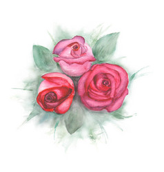 Watercolor painting with roses vector