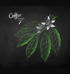 chalk drawn sketch of coffee branch vector image
