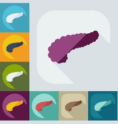 Flat modern design with shadow icons pancreas vector