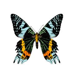 Hand drawn madagascan sunset moth vector
