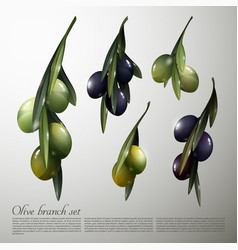 natural olive tree branches set vector image