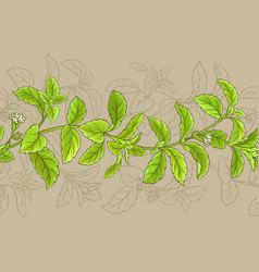 stevia frame vector image